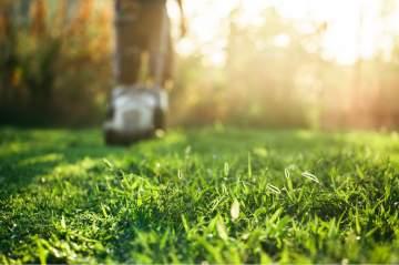 Contrat d'entretien annuel pour l'entretien de jardin sur Taillant